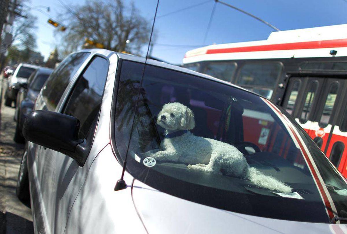Cosa fare se vedi un cane solo in un'auto?