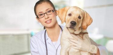 veterinaria-con-cane-372x182