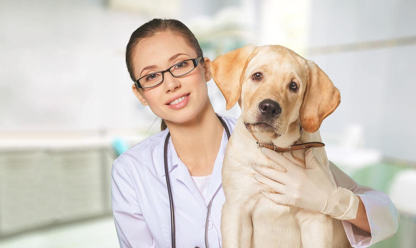 Sei un veterinario? Scopri come aumentare i tuoi clienti