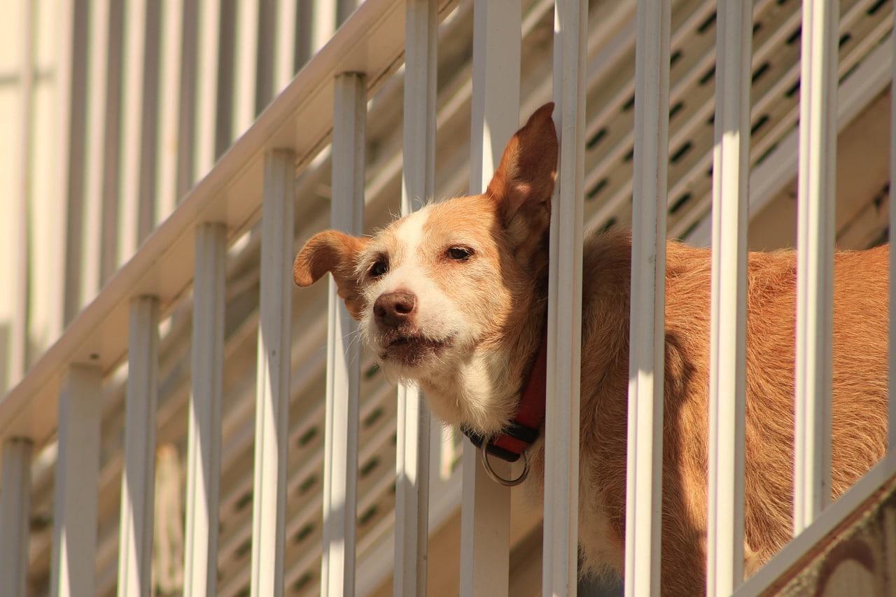 Cane lasciato sul balcone: cosa fare?