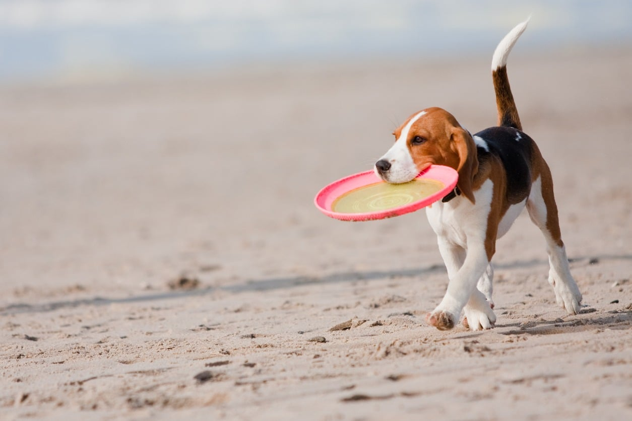 In spiaggia con il cane: è possibile o no?