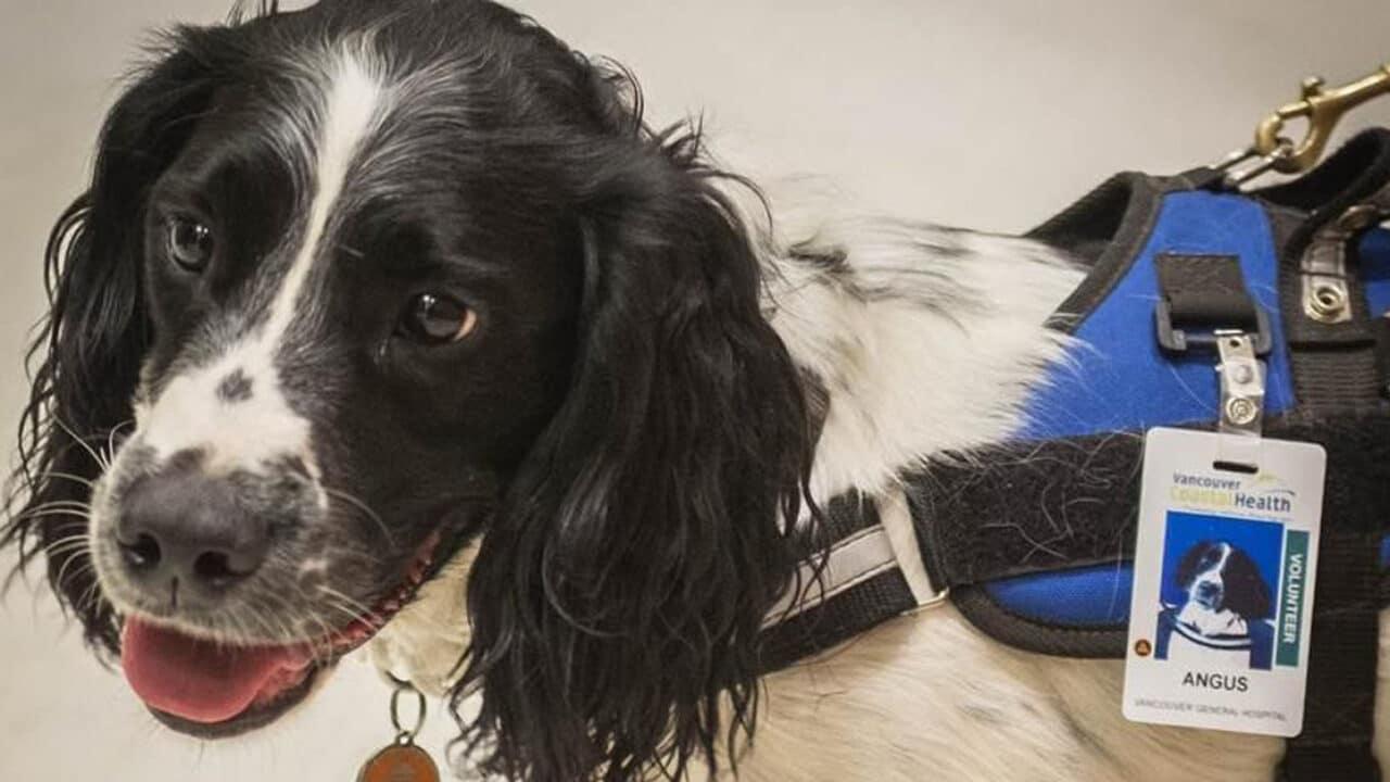 Cani in ospedale a caccia di batteri