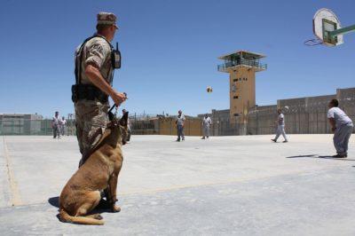 cane-carcere-400x266