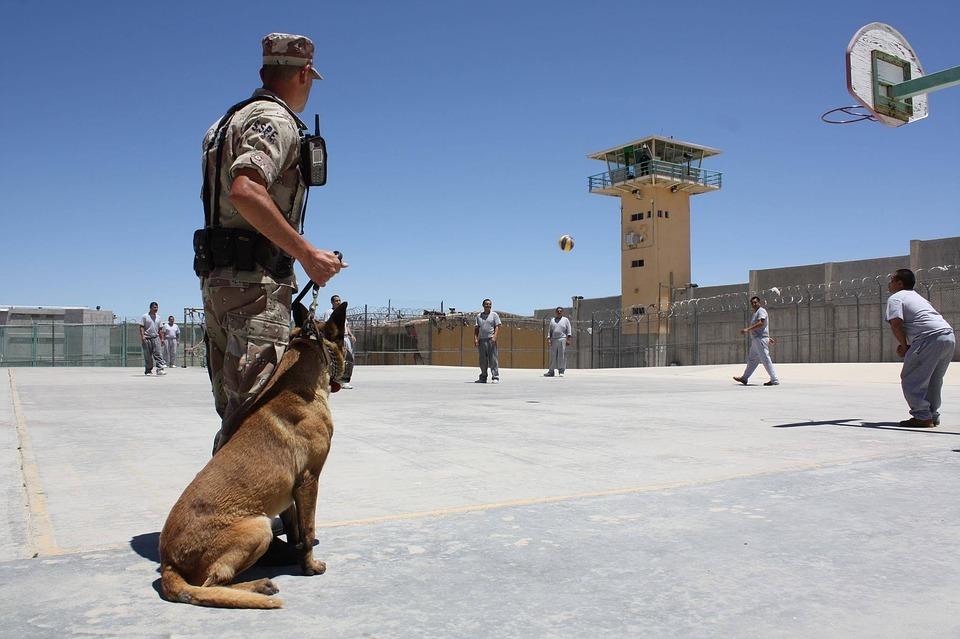 Ancona: i detenuti imparano ad educare i cani