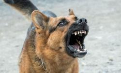 Come gestire un cane aggressivo