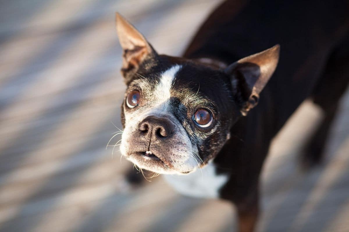 Sei stressato? il tuo cane ne risente!