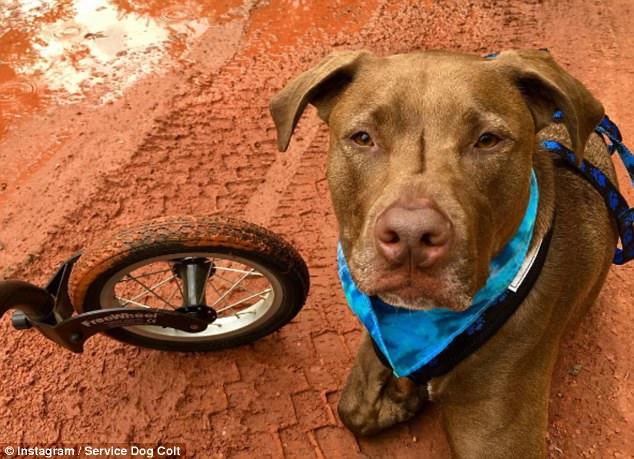 Addestra il suo cane per aiutarla a prevenire le crisi