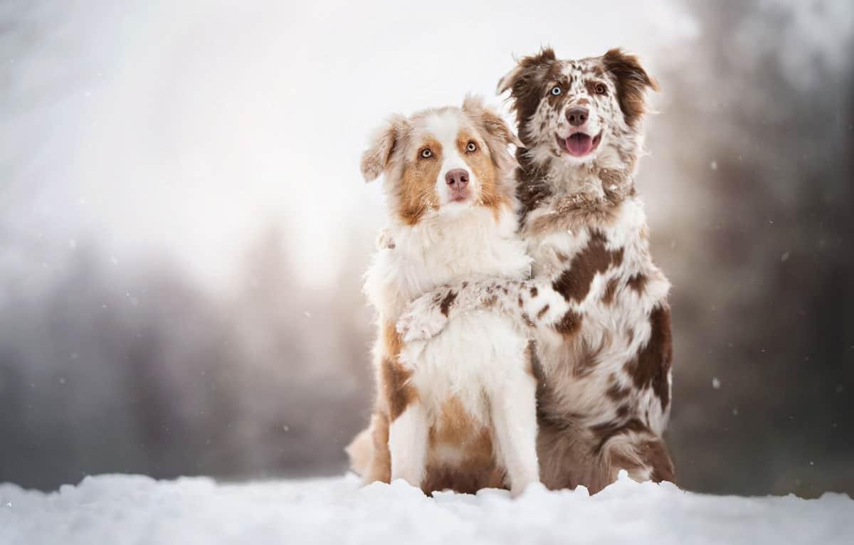 Meglio il cane maschio o la femmina? Quale scegliere?