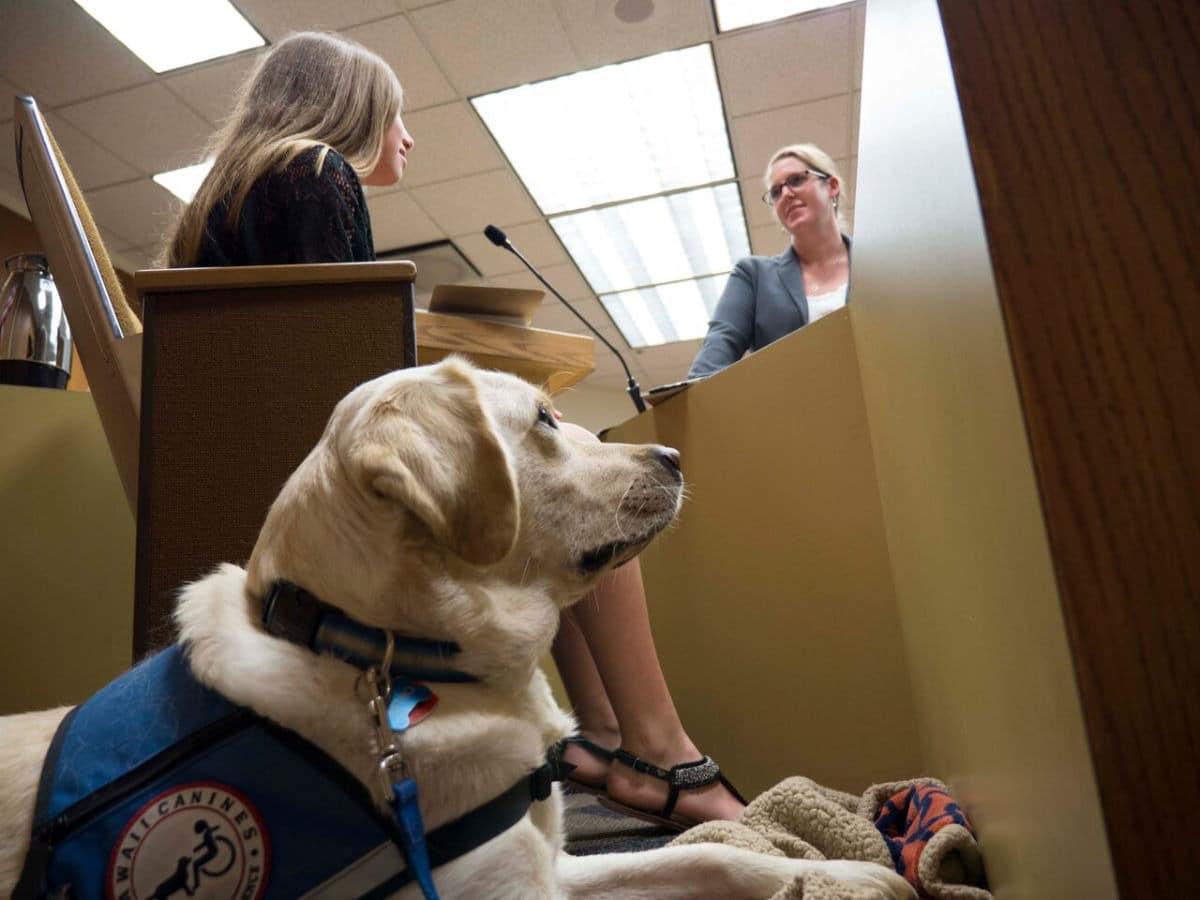 Cani in tribunale in aiuto delle vittime
