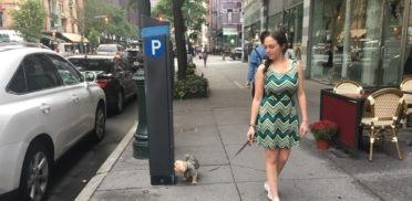 cane-fa-i-bisogni-davanti-al-negozio-372x182