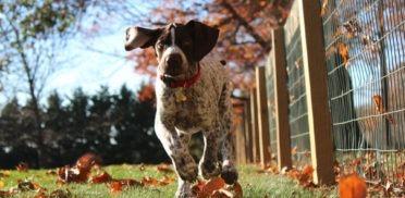 cane-che-caccia-372x182