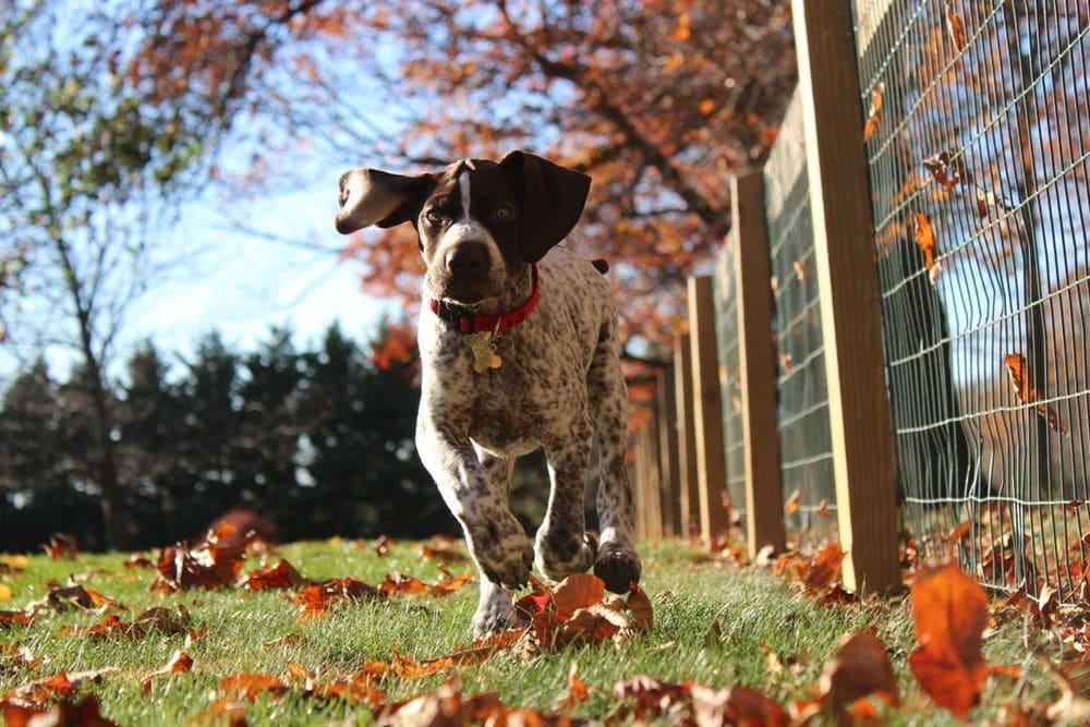 Il mio cane è un accanito predatore; come posso contenerlo?