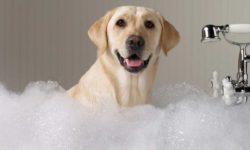 Come fare il bagno al cane?