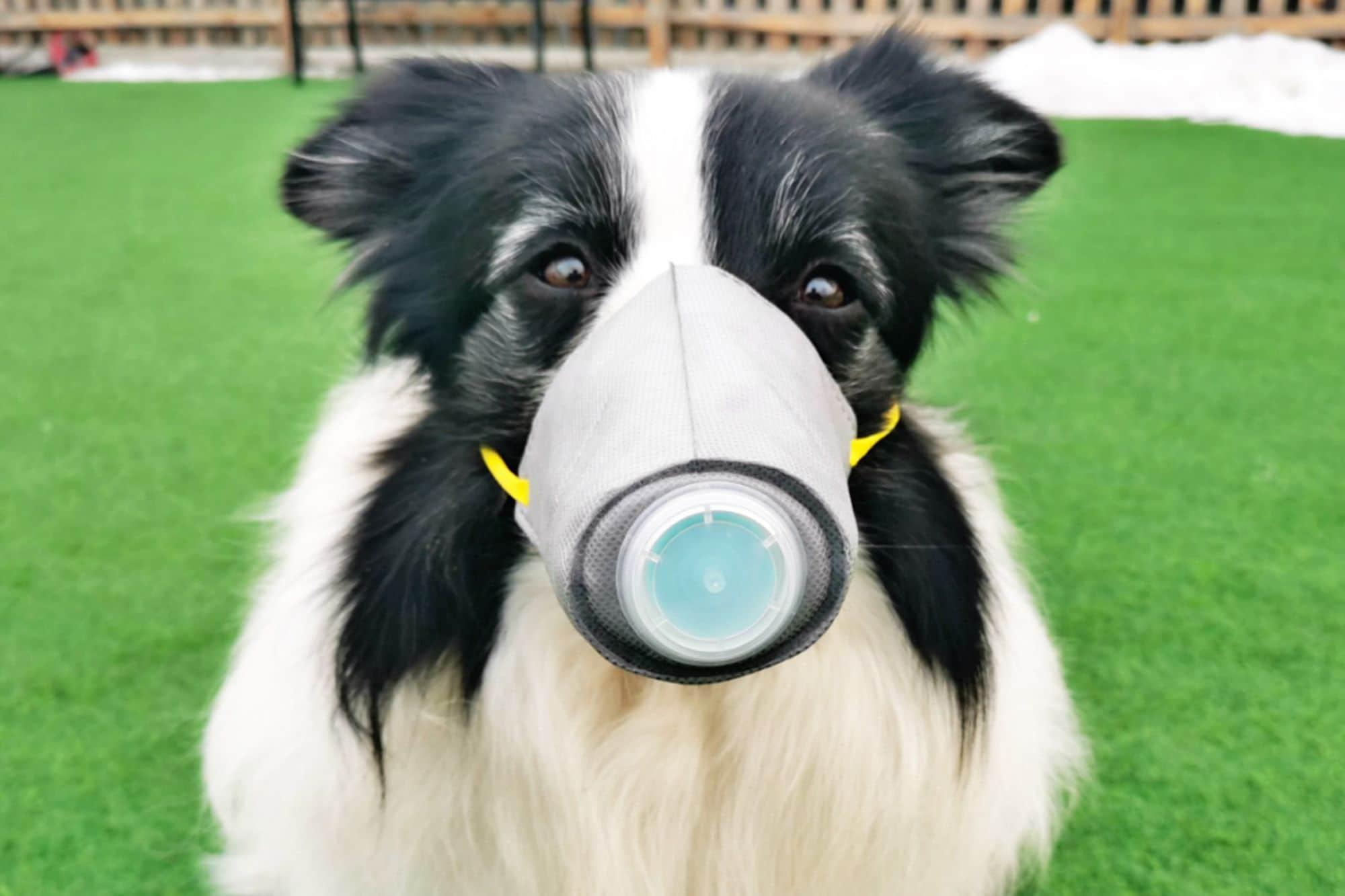 Coronavirus e cani: facciamo chiarezza!