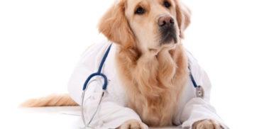 cane-vestito-da-dottore-372x182