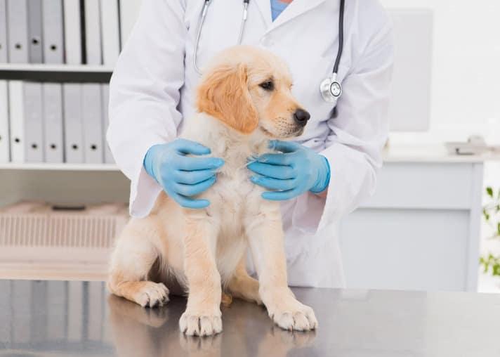 Calendario dei vaccini per cani: quando vanno fatti?