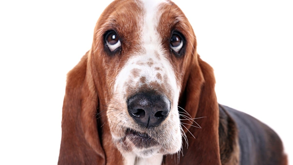 Il mio cane è inappetente; cosa posso fare?