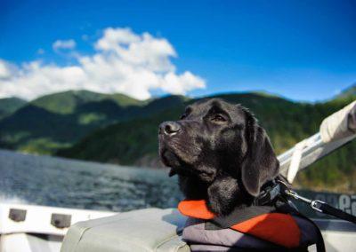 Come capire se il tuo cane soffre il mal di mare?
