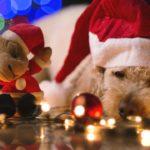 Regali di Natale per cani: cosa scegliere?